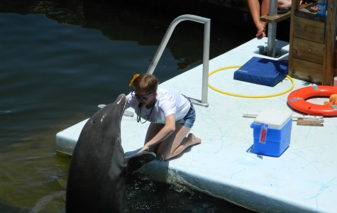Murray spends multiple summers working with dolphins